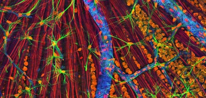 75d720e1Retina-neurons-and-cells-by-NIGMS-702x336